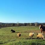 L'Arrandeterra se situe à 4 km de Vilobí d'Onyar et à 30 minutes de route de Gérone. Cette ferme propose un service de prêt de vélos, un jardin, une terrasse et un barbecue.
